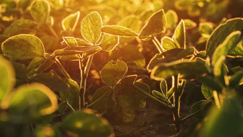 Agronegócio e Meio Ambiente - Olhando o problema nos olhos